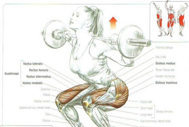 squat spieren