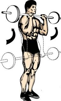 reverse barbell curl voor onderarmen