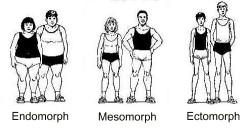 lichaamstype fitness