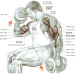 Dumbbell Curl, de basisoefening voor grotere biceps
