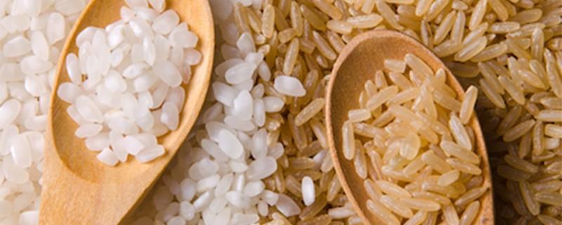 welke rijst is het best