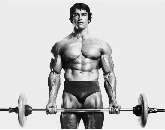 barbell curl biceps