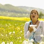 Stuifmeelkorrels tegen hooikoorts?
